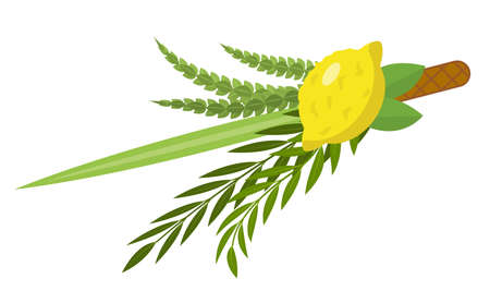 Sukkot set of herbs and spices of the etrog, lulav, Arava, Hadas. Isolated on white background. Vector illustration Vettoriali