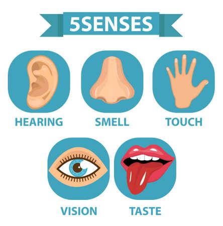 五感アイコンセット。タッチ、香り、聴覚、ビジョン、味は白の背景ベクトルイラストに分離  イラスト・ベクター素材