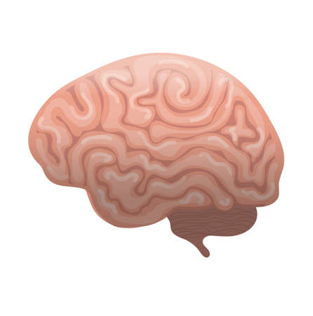 Human brain icon, flat style. Internal organs symbol the side view, isolated on white background Vector illustration