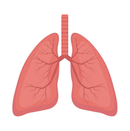 Lungs icon, flat style. Internal organs of the human design element, logo. Anatomy, medicine concept. Healthcare. Isolated on white background. Vector illustration