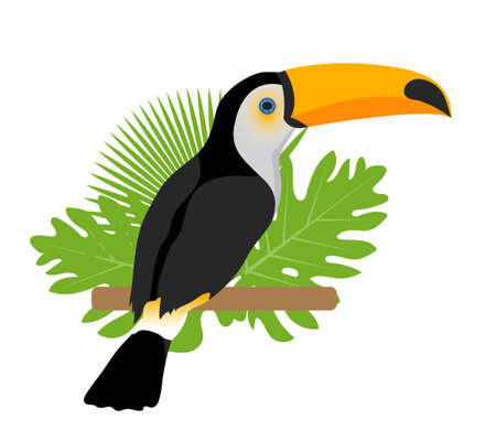Toco toucan icon is a flat, cartoon style. Exotic bird sitting on a branch in the tropics. Isolated on white background. Vector illustration Illustration