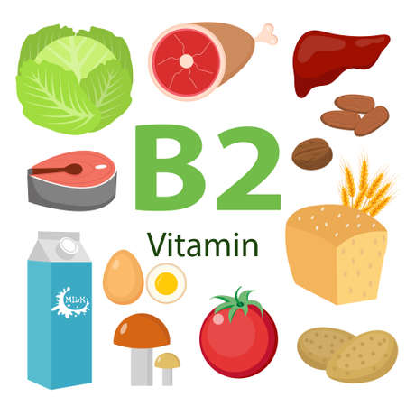 Vitamins and Minerals foods Illustrator set 7.Vector set of vitamin rich foods. Vitamin B2-milk, egg, spinach, oysters, cheese, liver, mushrooms and broccoli. 矢量图像