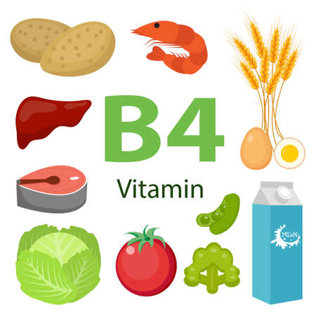 Vitamin B4 nutrition infographic with medical and food icons diet, healthy food and wellbeing concept.