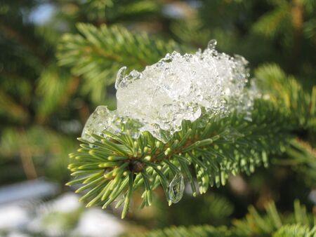 Photo of ice on evergreen