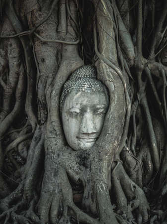 cabeza de buda: Buda cabeza en las raíces del árbol