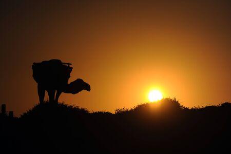 해질녘 낙타