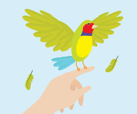 Lady Gouldian Finch Bird On Hand Stock Vector - 21465514