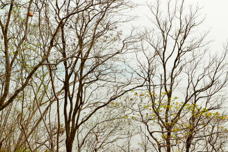 leafless: Leafless Forest Tree Branch