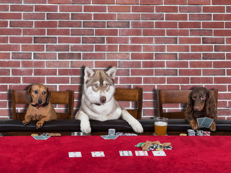 Three Dogs Playing Poker