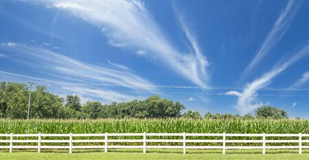 wideangle: Corn Field Panoramic Shot on a clear day with interesting cloud formation