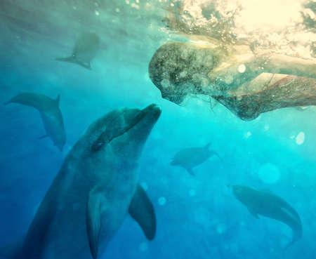 comunicar: niña bajo el agua se comunica con el delfín. collage Foto de archivo