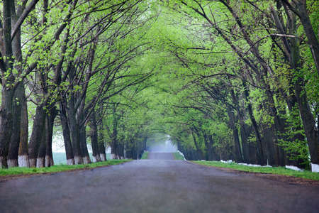 back country: Back country road on a misty rainy day. Stock Photo