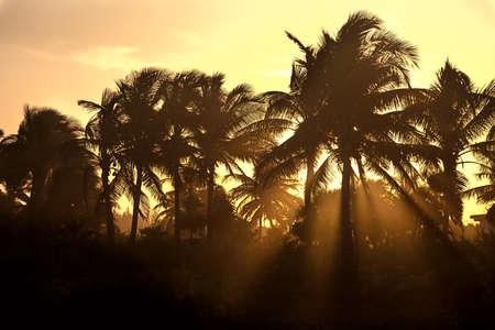 Rays of sunset way through the palm trees Standard-Bild