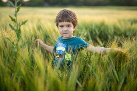Cute boy in cyan T-shirt with pictures stands in the rye field and looks into the camera. He touches the rye. Sunlight fills from the back. Outdoors. Horizontal.