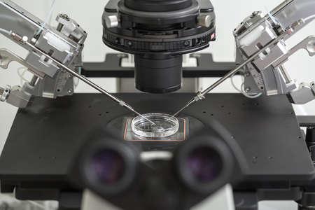 Laboratory fertilization in IVF microscope Zdjęcie Seryjne