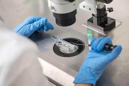 Comprobación del resultado de la fecundación in vitro Foto de archivo - 76768530