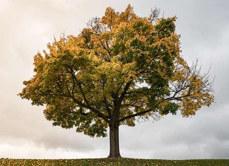 Autumn tree on sky background