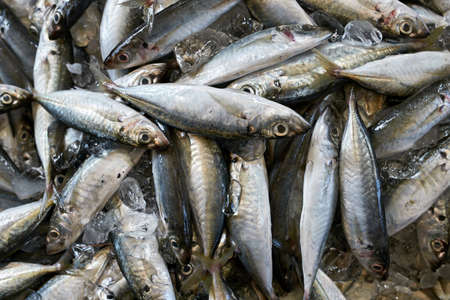 Lot of fishes on market Stock Photo