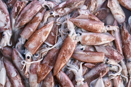 Many squids on market