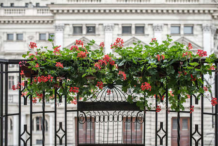 Two flowerpots with red geraniums on the metal balcony on the house background. Closeup horizontal photo. Archivio Fotografico