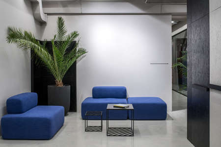 Relax zone in a luminous office with gray and textured black walls and a glossy floor. There are blue sofas, small stands with books, green plant in a big pot, glass partitions with curtain. Archivio Fotografico