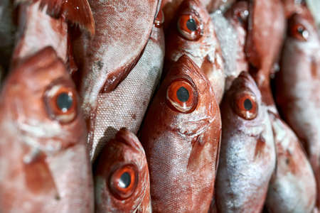 Macro photo of fresh red fishes with same color eyes which are lying on each other at the market. Horizontal.