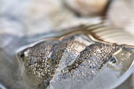 Macro photo of forepart of amazing horseshoe crab Stock fotó