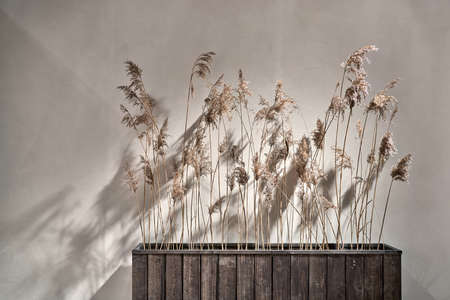 Dried plants in the wide textured wooden flowerpot on the light wall background in the illuminated interior. Closeup horizontal photo. Zdjęcie Seryjne