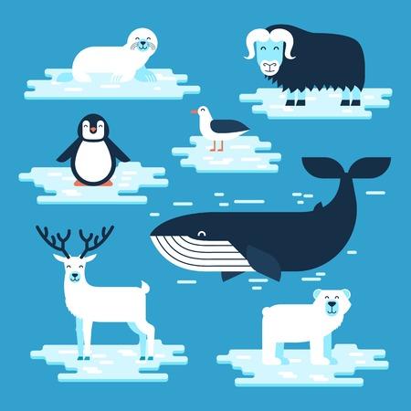 Arktische und antarktische Tiere stellten, flache Designillustration des Vektors ein. Polare Tiere für die Infografik. Standard-Bild - 80489053