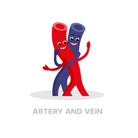 Healthy vein and artery cartoon character isolated on white background. Happy veins icon vector flat design. Healthy blood vessels concept medical illustration. Stock Photo
