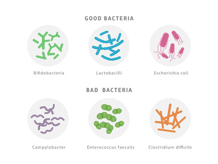 Good and bad bacterial flora icon set isolated on white background. Gut dysbiosis concept medical illustration with microorganisms.