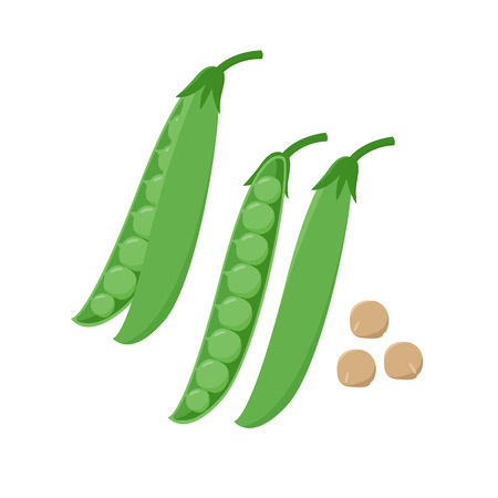 Green Pea pod and peas seeds vector illustration in flat design isolated on white background. Packaging design element.