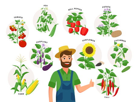 Cute farmer and his harvest around him. Set of vegetable plants and ripe fruits, tomato, chili pepper, sunflower, corn, pea, cucumber, potato isolated on white background, illustrations in flat design. Illustration
