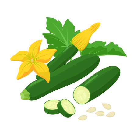 Zucchini with beautiful Squash blossoms and seeds isolated on white background. Vector botanical illustration of dark green courgette with awesome yellow flowers