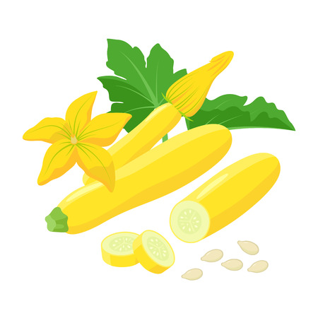 Yellow Zucchini with beautiful Squash blossoms and seeds isolated on white background. Vector botanical illustration of yellow courgette  イラスト・ベクター素材