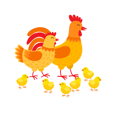 Hens family cute cartoon characters. Hen, rooster and chickens isolated on white background. Happy chicks vector illustration in flat design. Mother hen, father cockerel and yellow poults