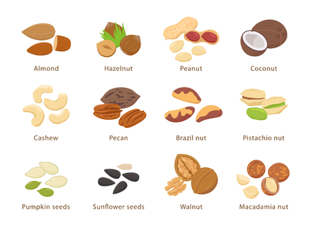 Nuts and seeds in flat design vector set of illustrations. Collection of nuts, seeds icons, infographic elements isolated on white background. Illustration