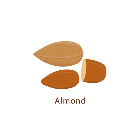 Almond nuts isolated on white background vector illustration in flat design.
