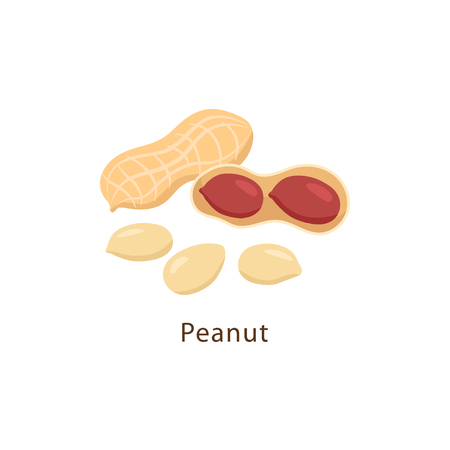 Peanut isolated on white background vector illustration in flat design.
