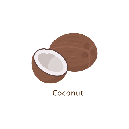 Coconut isolated on white background vector illustration in flat design. Ilustrace