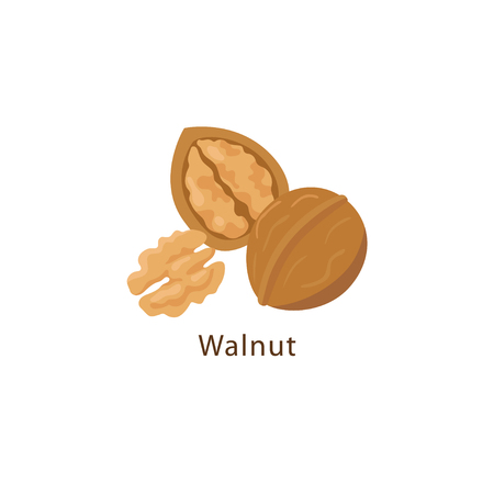 Walnut isolated on white background vector illustration in flat design.