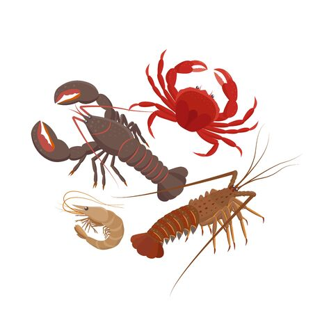 Crustaceans set of vector illustrations in flat design isolated on white background. Lobster, Spiny lobster, Srimp, rab.