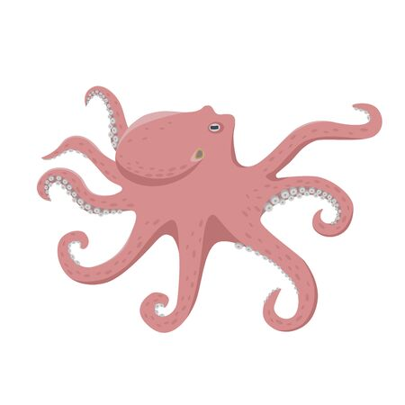 Octopus vector illustration in flat design isolated on white background.