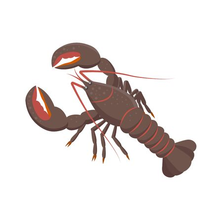 Lobster vector illustration in flat design isolated on white background.