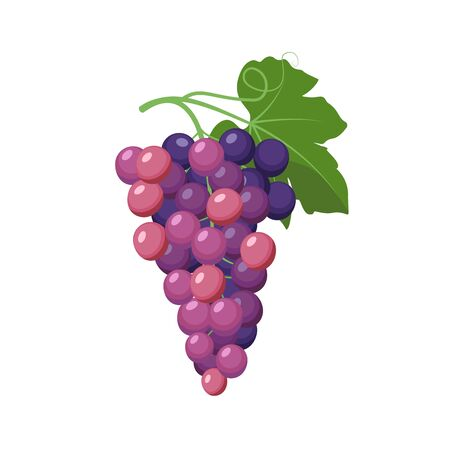 Grape cluster vector illustration in flat design isolated on white background.