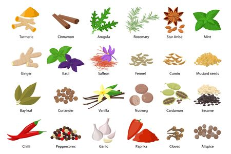 Large set of spices vector illustrations in flat design isolated on white background. Spices and herbs icons collection