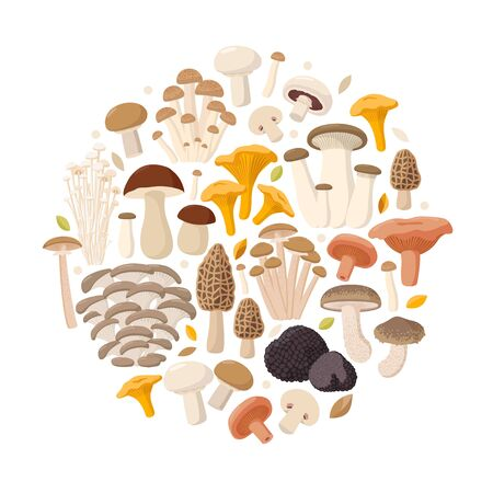 Mushrooms collection of vector flat illustrations isolated on white in round. Cep, chanterelle, honey agaric, enoki, morel, oyster mushrooms, King oyster, shimeji, champignon, shiitake, black truffle.