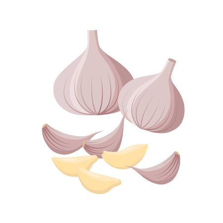 Garlic isolated on white background. Vector illustration. Garlic Bulbs and cloves in flat design isolated on white background.