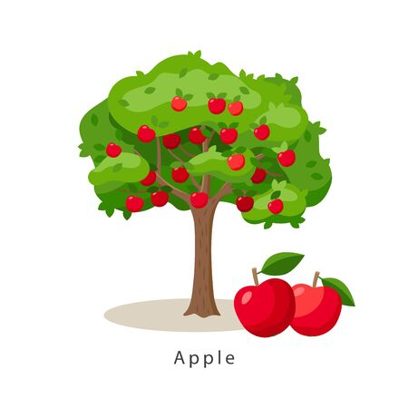 Apple tree vector illustration in flat design isolated on white background, farming concept, tree with fruits and big red apples near it, harvest infographic elements.