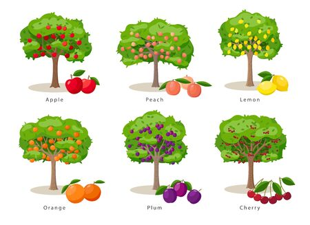 Fruit trees set of illustrations in flat cartoon gesign isolated on white background, fruit trees farm icons concept, vector infographic elements. Ilustração